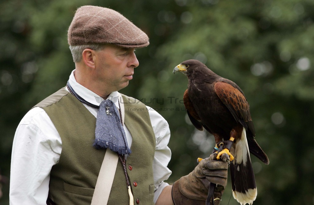 Falconry_Leeds_Castle_Kent